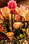 Tulips Arrangement in the lamplight — Stock Photo
