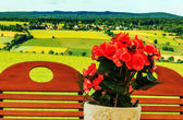 Golden-green landscape with red begonias — Stock Photo