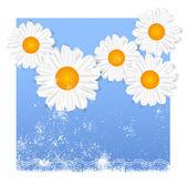 Daisy. Chamomiles. — Vetorial Stock