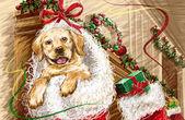 Winter theme, merry christmas — Stock Photo