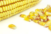 Cobs and corn — Stock Photo