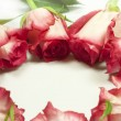 Roses in circle — Stock Photo #25082931