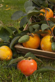 Collection of persimmon — Stock Photo