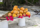 Coconut with tropical flower on exotic coast — Stock Photo