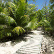 Royalty-Free Stock Photo: Pathway in tropical park - abstract travel background