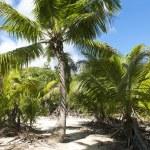 ������, ������: Beach setting on the beach in Seychelles Denis private island Indian Ocean