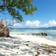 Stock Photo: Fabulous beach in seychelles
