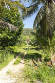 удивительные сейшельские острова — Стоковое фото