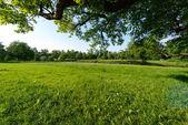 Catherine Park, Summer time. Pushkin — Stock Photo