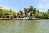 Sri Lanka. West Coast. Mangroves. — Stock Photo