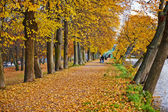 Beautiful golden autumn in the city park. — 图库照片