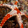 Stock Photo: Colorful seastar