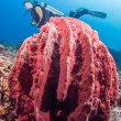 Diver and giant sponge — Stock Photo