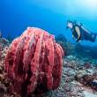 Diver and giant sponge — Stock Photo #33193225