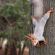 Squirrel on a tree — Stock Photo #24594315