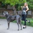 Beautiful woman with a large dog — 图库照片