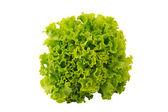 čerstvý zelený hlávkový salát — Stock fotografie