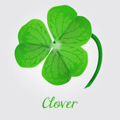 Clover leaf — Vector de stock