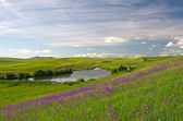 Lake and green meadow — Stock Photo