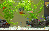Home aquarium — Stockfoto
