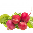 Bunch fresh radish — Stock Photo #46596063