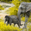 Baby elephant with mother in forest  — Stock Photo