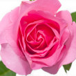 Natural red roses background — Stock Photo