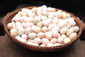 Duck eggs — Stock Photo