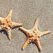 Two sea-stars on sand beach background — Stock Photo