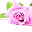 Stock Photo: Beautiful pink rose with green leaves isolated on white backgrou