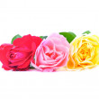 Three beautiful pink roses with water drops isolated on white ba — Stock Photo