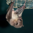 Night bat - Stock Photo