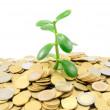 Plant growing out of gold coins isolated on white background — Stock Photo