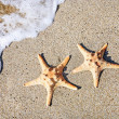 Two sea-stars on sand beach with waves background - Stock Photo