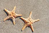 Two sea-stars on sand beach background — Stock Photo