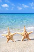 Holiday concept - two sea-stars walking on sand beach against wa — Stock Photo