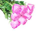 пять роз, изолированные на белом фоне — Стоковое фото