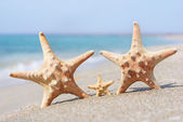 Family holiday concept - sea-stars walking on sand beach against — Stock Photo