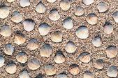 Many seashells on beach sand background or texture — Stock Photo