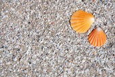 Orange seashells on the beach sand background — Stock Photo