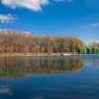 Stock Photo: Forest reflection panorama