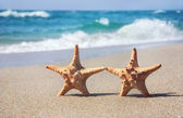 Holiday concept - two sea-stars walking on sand beach against waves background — Stock Photo