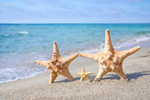 Family holiday concept - sea-stars walking on sand beach against waves background — Stock Photo