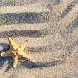 Stock Photo: Sea-star lying on rippled sand beach