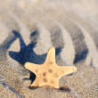 Stock Photo: Sea-star on rippled sand beach