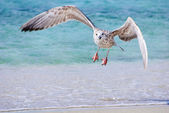 Sea gull at the sand beach — Stock Photo
