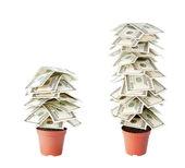 白い背景で隔離のドルの金のなる木 — ストック写真