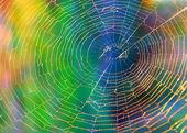 Spider web (cobweb) background — Stock Photo
