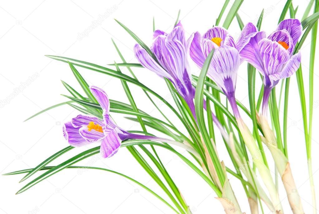 фото цветов на белом фоне: