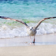Stock Photo: Segull at beach